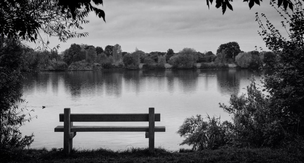 A bench next to a lake